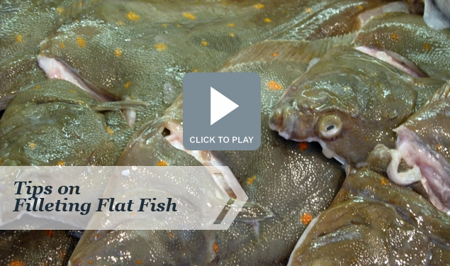 Tips on Filleting Flat Fish